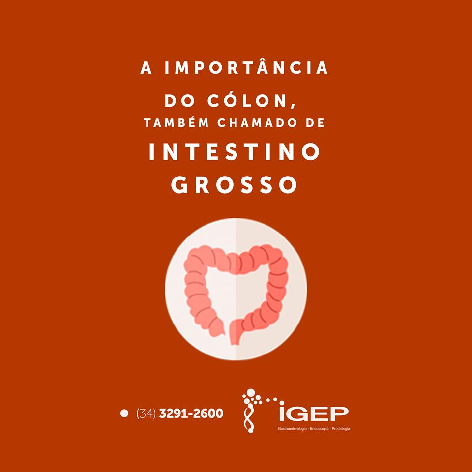 A importância do cólon, também chamado de intestino grosso